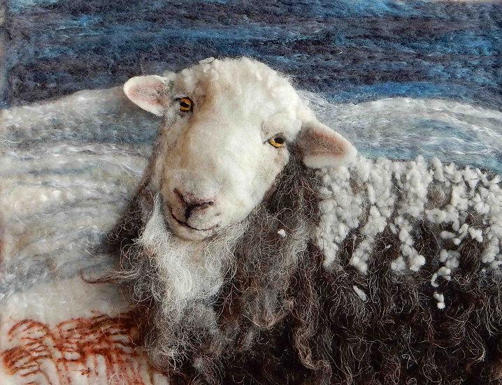 Fibre art sheep winter Herdwick ewe