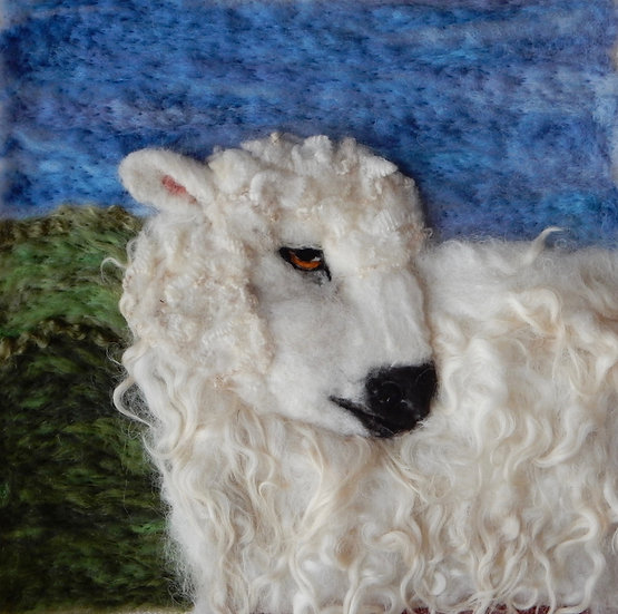 Greyface Dartmoor 1