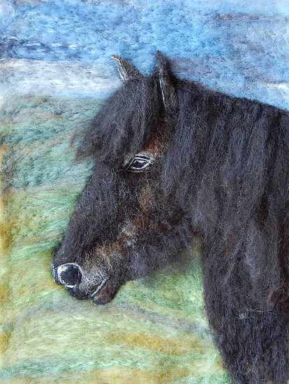 Dales pony portrait