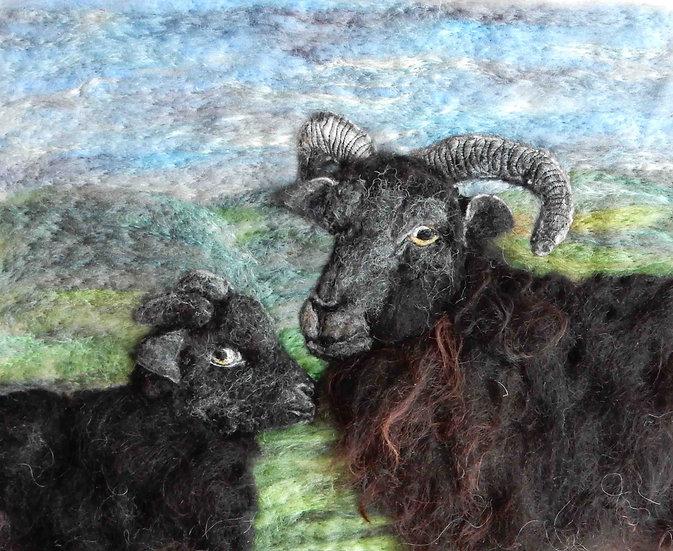 Black Hebridean ewe and lamb