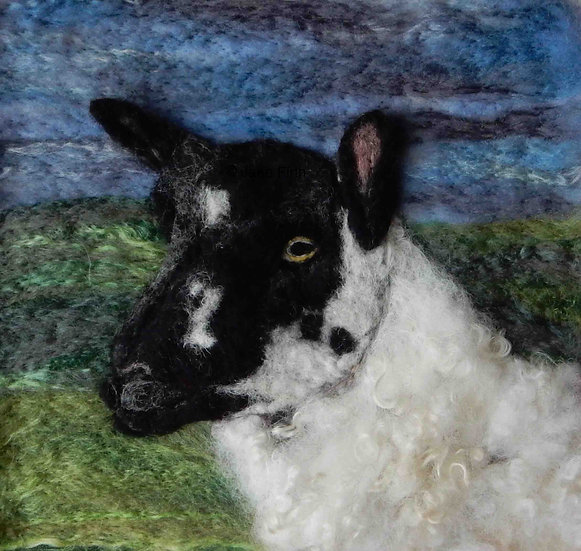 Beulah Speckled Face sheep portrait