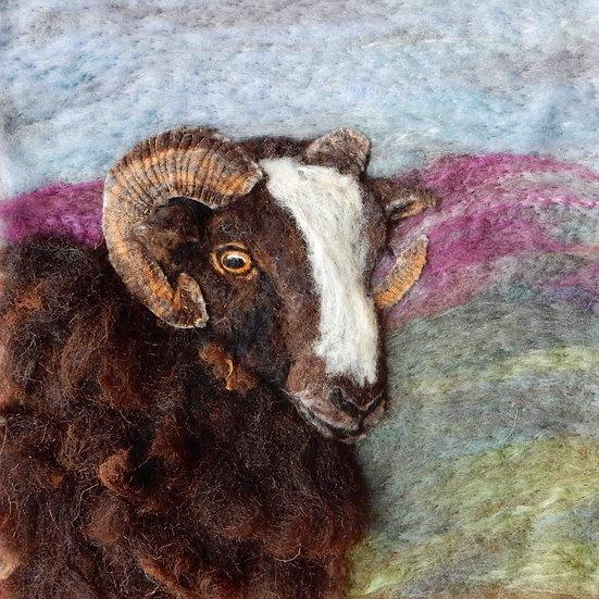 Balwen sheep portrait