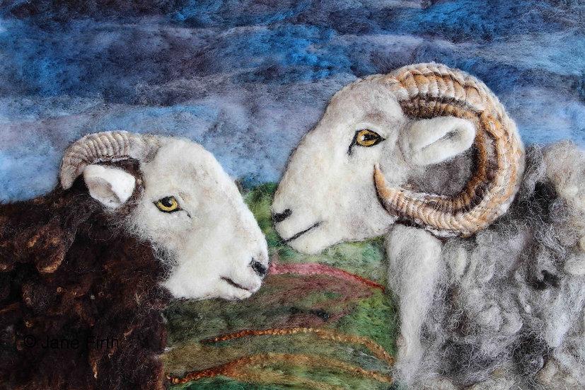 Two Herdwick rams greetings card