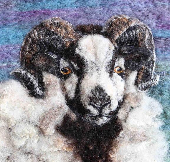 Katmoget Shetland sheep greetings card