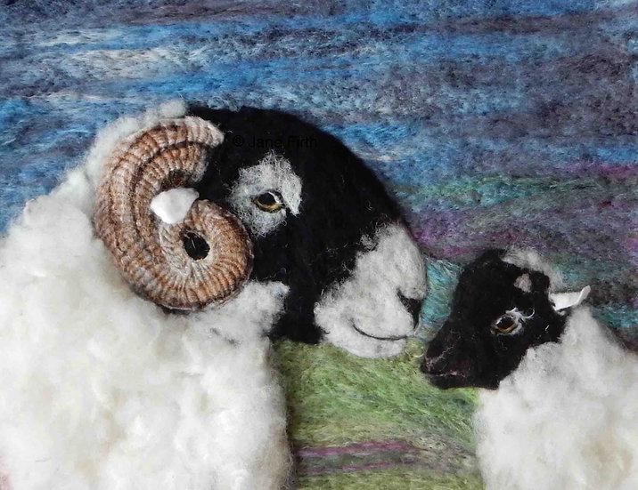 Swaledale ewe and lamb sheep portrait