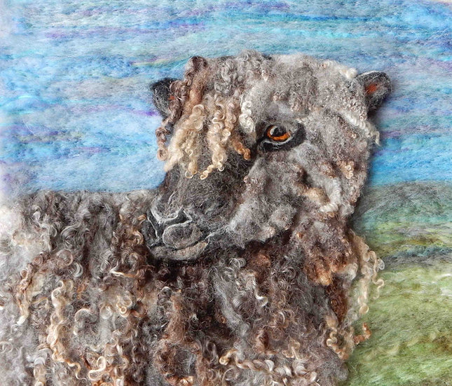 Black Wensleydale sheep portrait
