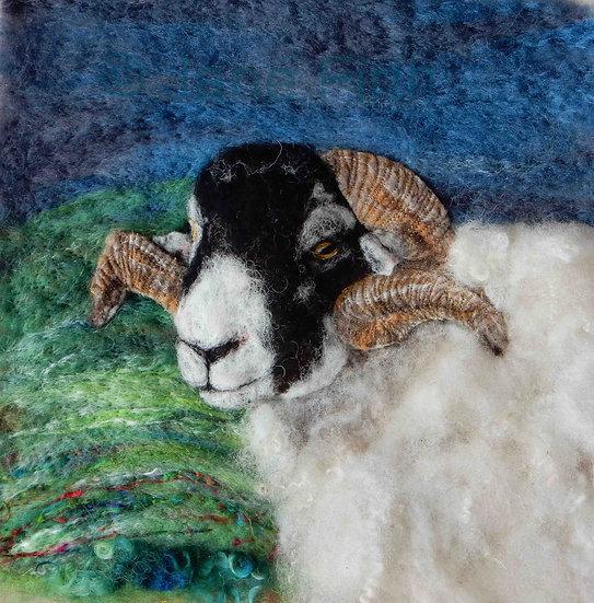 Swaledale ram portrait