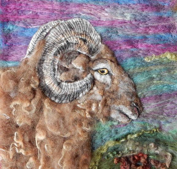 Castlemilk moorit sheep portrait