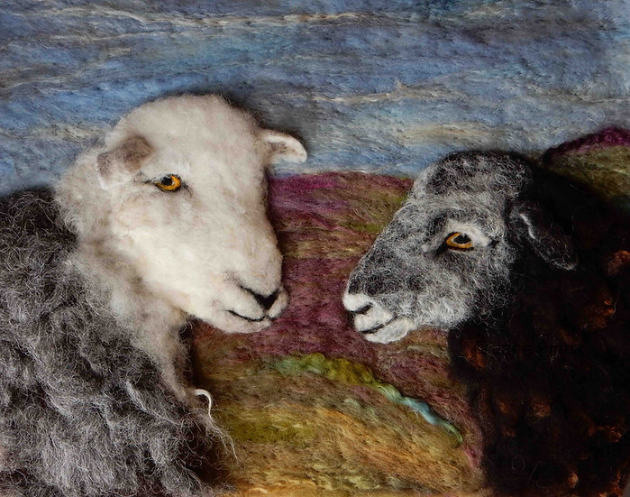 Herdwick ewe and lamb portrait