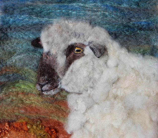 Dorset Down sheep portrait