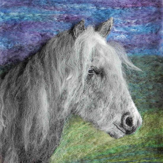 Eriskay pony portrait