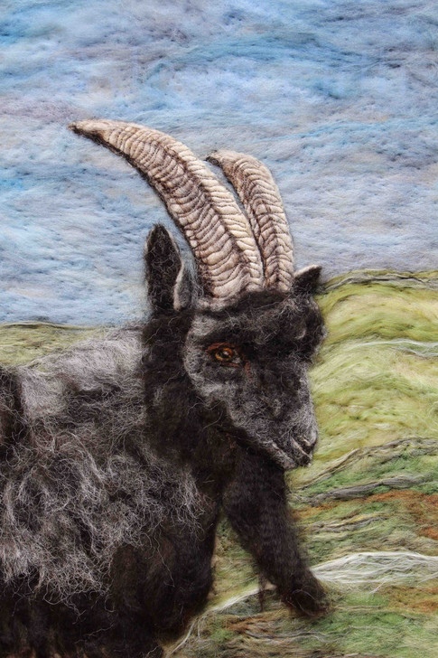 Ardnamurchan Feral Goat