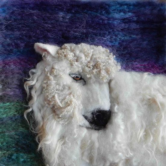Greyfaced Dartmoor sheep portrait