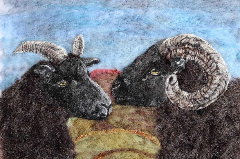 Hebridean ram and ewe