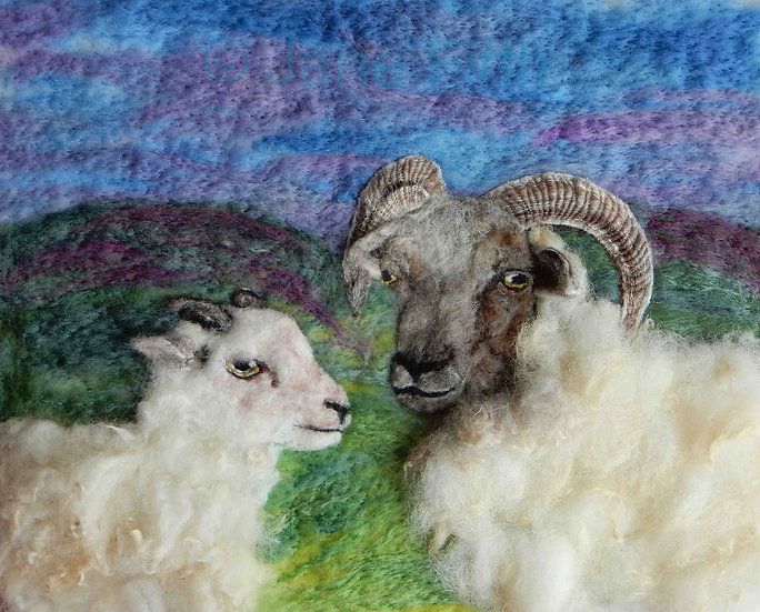 White Hebridean ewe and lamb portrait