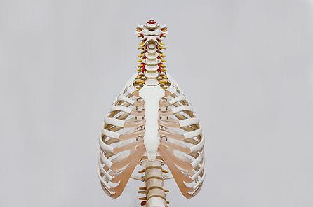 colonne vertébrale ostéopathe