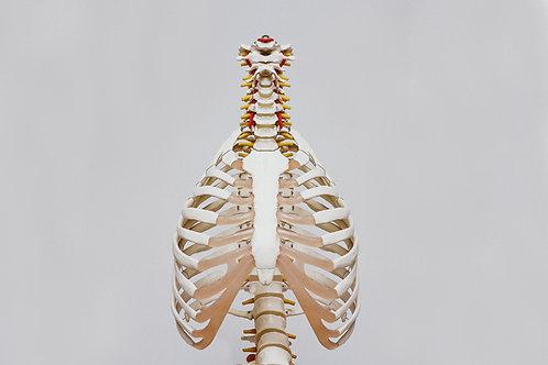 General Medicine X-ray Technique Chart