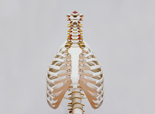 All about 'dem bones!