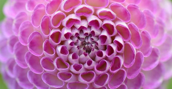 flower-1539312.jpg