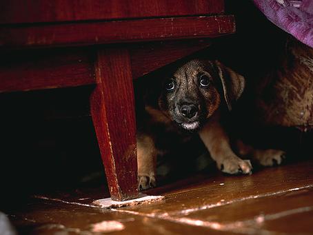Il cane ha paura dei botti di capodanno: cosa faccio?