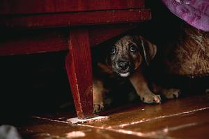 il cane ha paura dei botti