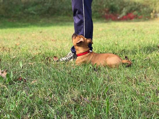 Alessio Borromeo Puppy Training comandi di base