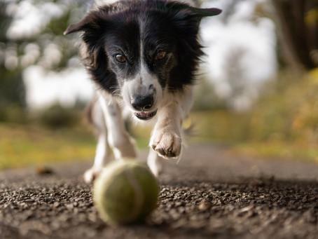 La pallina come strumento diseducativo