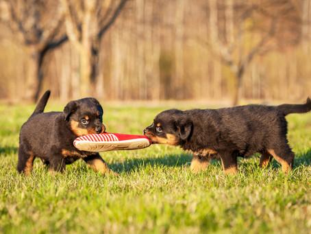 L'American Veterinary Society of Animal Behavior sulla Socializzazione