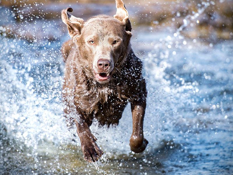 cane gioco acqua libertà