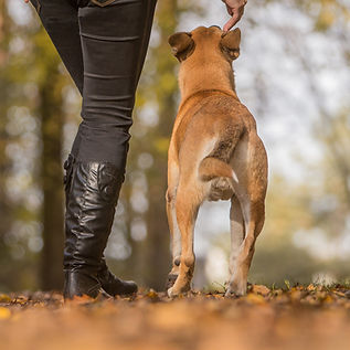 Alessio Borromeo Rieducazione cani problematici