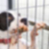 Consulenza pre adozione cane