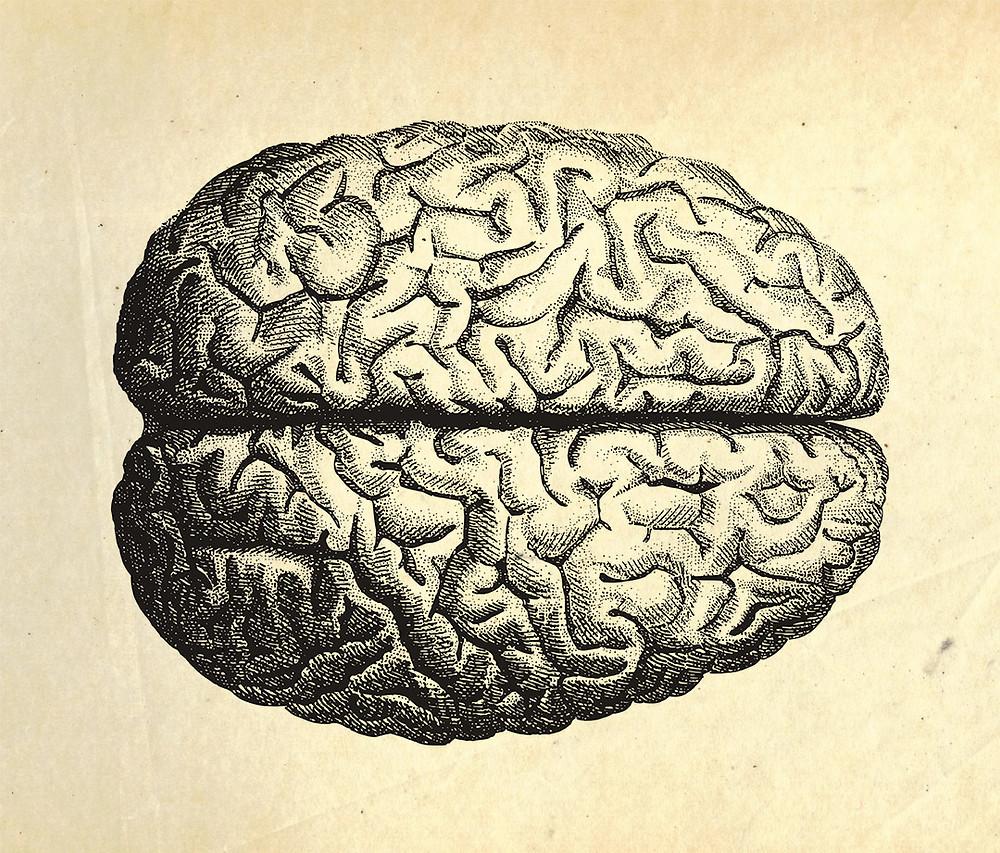 cervello brain illustrazione neurochirurgia