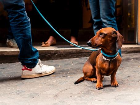 L'incontro tra cani al guinzaglio
