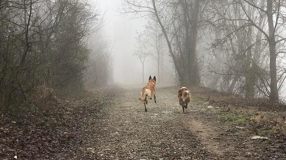 la libertà è l'obiettivo finale - Balanced Dogs Alessio Borromeo