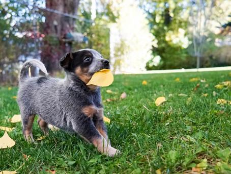 Cose da fare, e da non dimenticare, con un cucciolo
