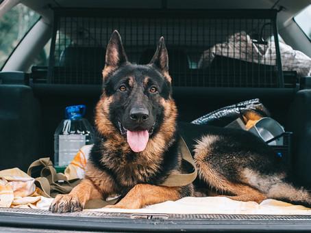 Come faccio a... far salire il mio cane in macchina?