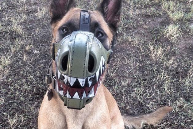 museruola cani addestramento