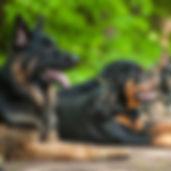 Alessio Borromeo Addestramento Avanzato cani