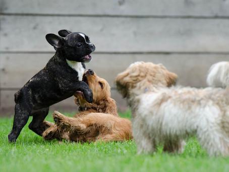 La socializzazione del cucciolo con altri cani