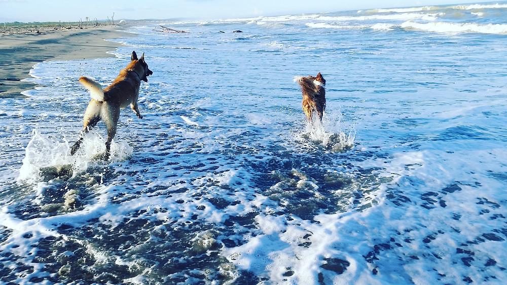 cane mare bagno libertà liberi - Balanced Dogs Alessio Borromeo
