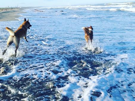 Il mio cane ha paura dell'acqua, come fare?