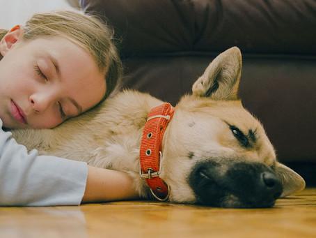 Non esiste il cane perfetto per un bambino