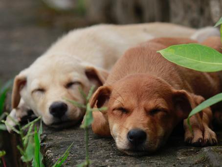 Come vivere con due cani (ma anche con tre, quattro…) - Nozioni di base