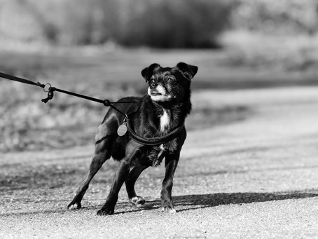 Il cane che ringhia
