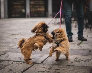 autostima cane cucciolo aggressività