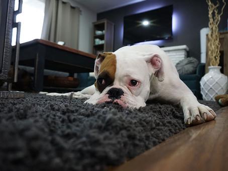 Il cane che vorrei (ma non ho)