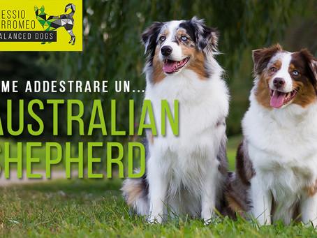 COME ADDESTRARE... un Pastore Australiano (Australian Shepherd)