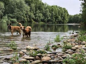 Cani bagno nel fiume