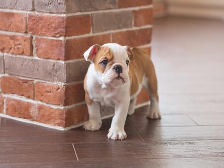 """""""Voglio un cane"""": come scegliere e cosa fare col nuovo cucciolo"""