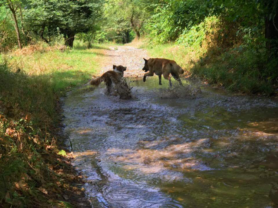 Cani corrono fango - Balanced Dogs Alessio Borromeo
